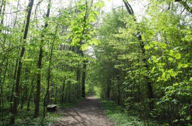 leipziger auenwald süd