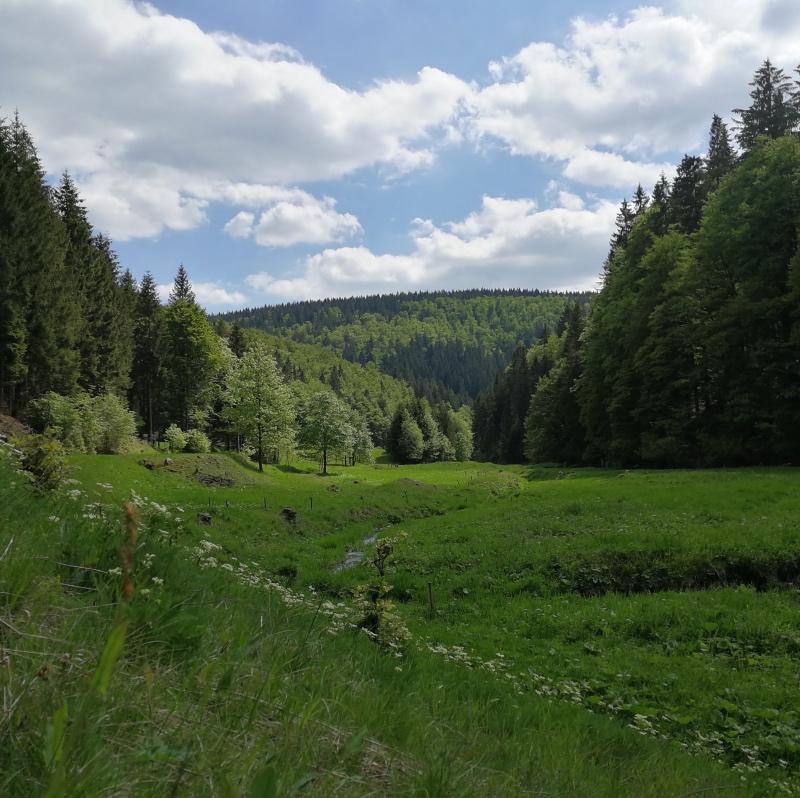 Thüringer Tal
